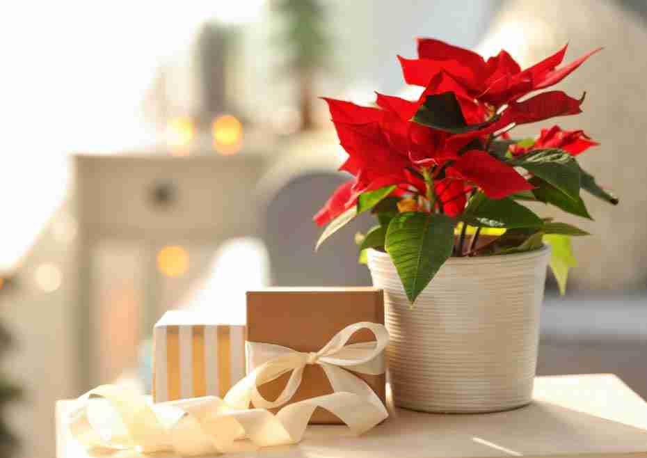 Easy Diy Christmas Decorating Ideas With Flowers Gift Guide